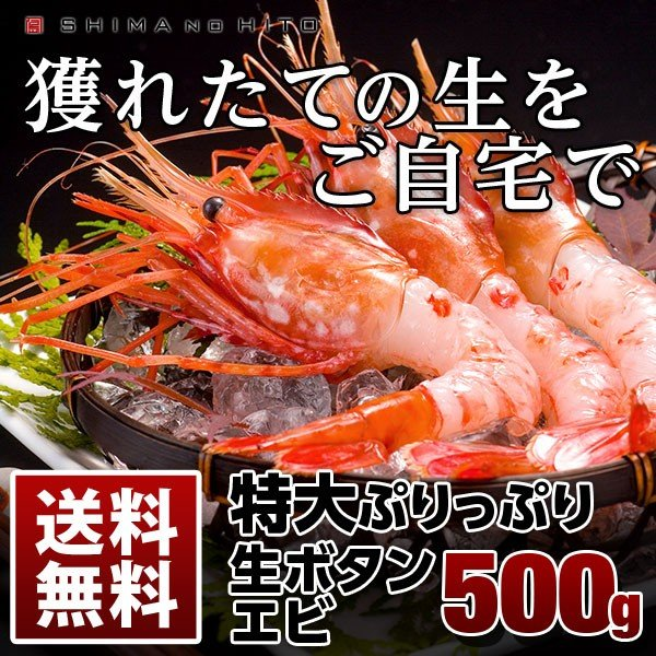 未冷凍 北海道産 生ボタンエビ500g 送料無料 1尾1尾が大きいサイズで食べ応え抜群! 15~20尾入り