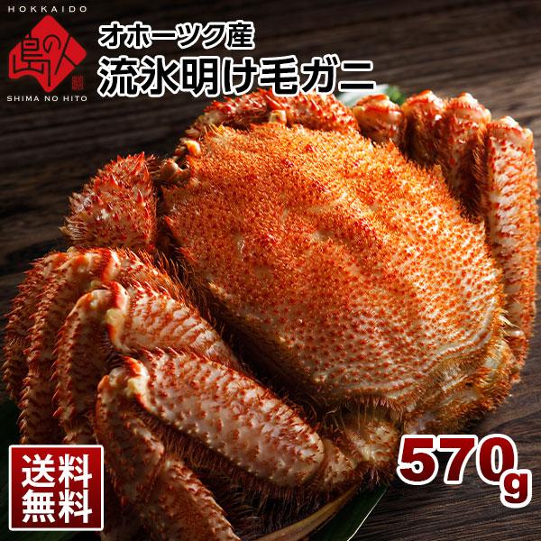 「流氷明け毛蟹」北海道産 茹でたてが届く 570g【送料無料】