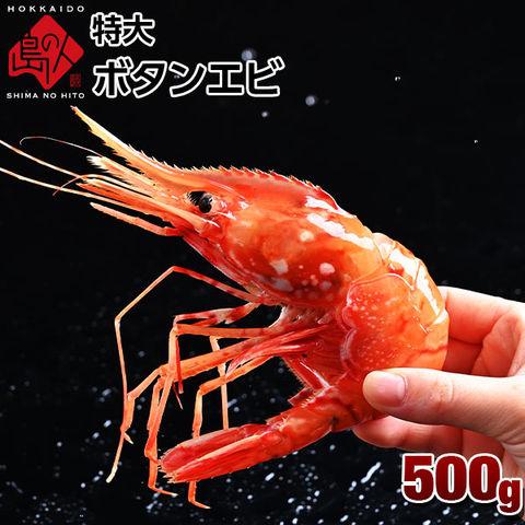 【食べ応え抜群】ロシア産 特大お刺身 ボタンエビ 500g (9-11尾)