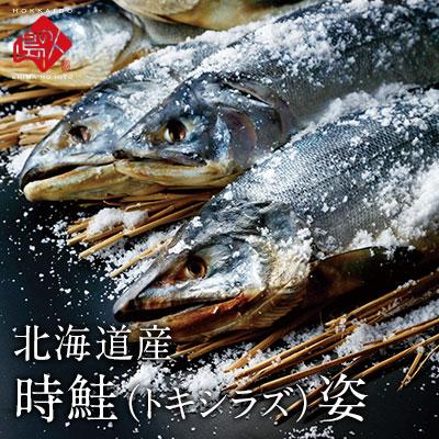 北海道産 時鮭(トキシラズ)姿 2.0kg
