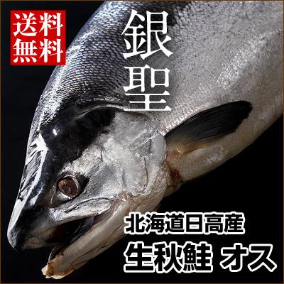 生秋鮭『銀聖』(北海道日高産) オス 大3.5~3.8kg 送料無料 旬の秋鮭を丸ごと一本お届け!