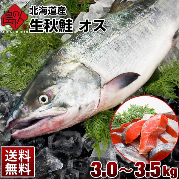 10月31日販売終了 生秋鮭 オス 北海道産 大3.0~3.5kg 送料無料