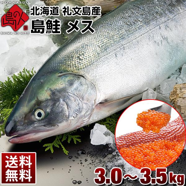 北海道 礼文島産 島鮭 メス 大3.0~3.5kg 送料無料